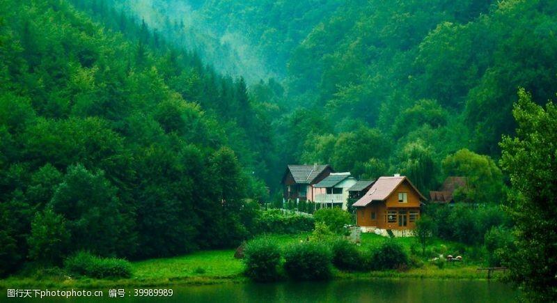 绿叶风景图片