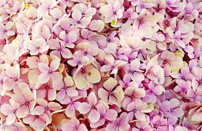 玫瑰花朵粉色花瓣图片