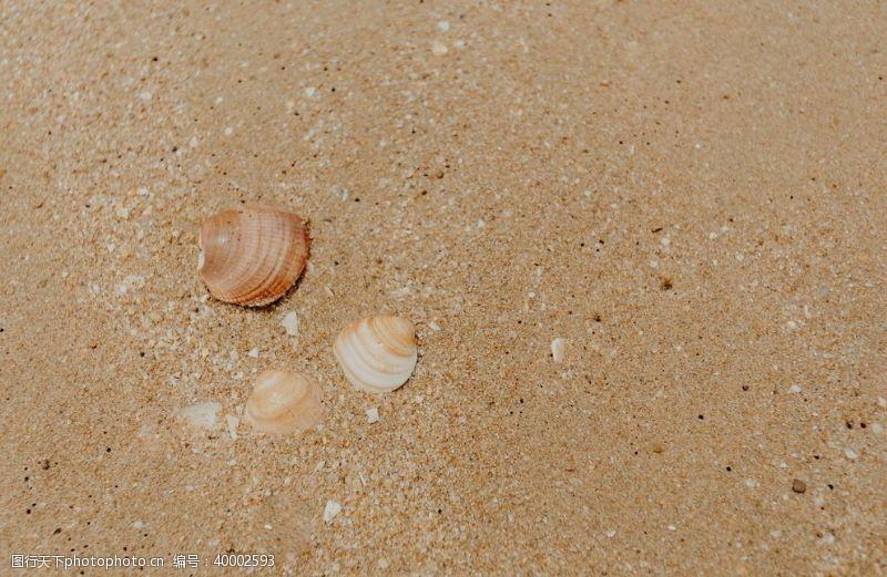 土地沙滩背景贝壳图片