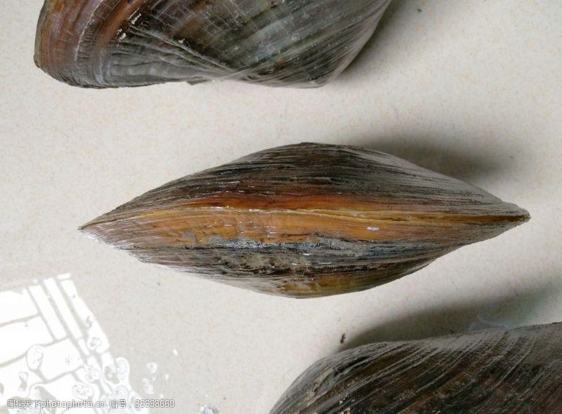贝类海鲜贝壳图片