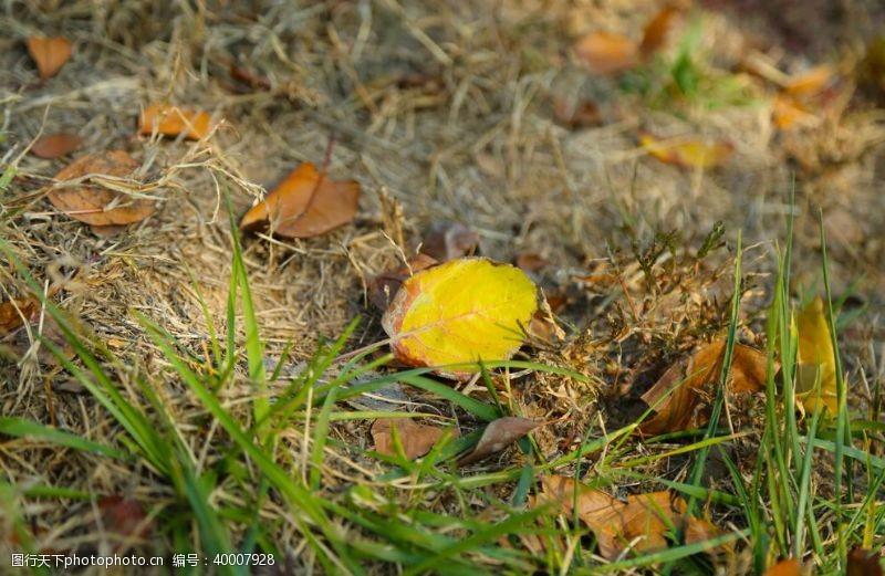摄影图库荒草树叶图片
