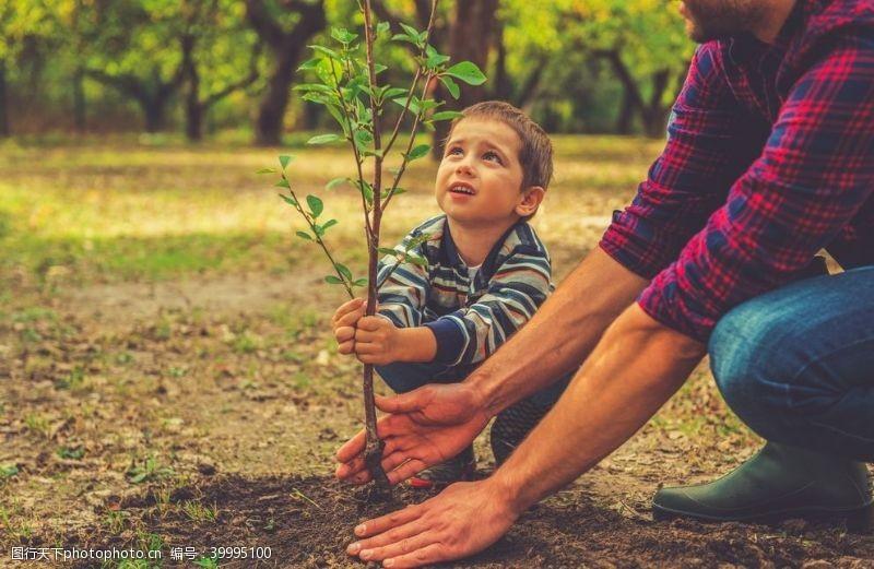 土壤手捧幼苗图片