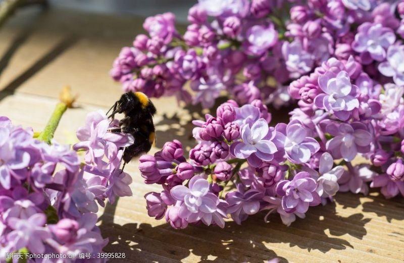 花草背景紫丁香图片