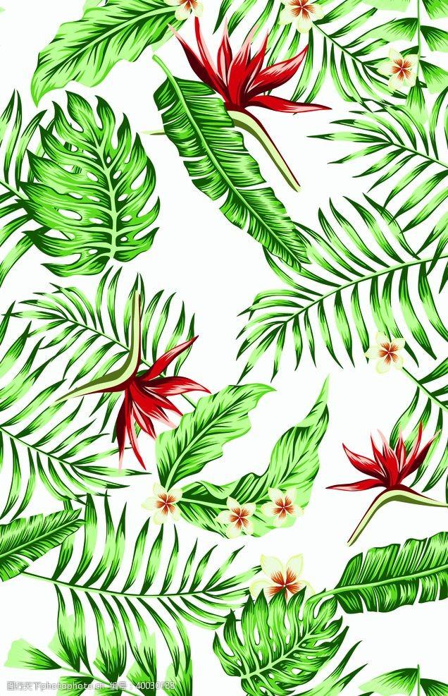 棕榈叶芭蕉树叶图片