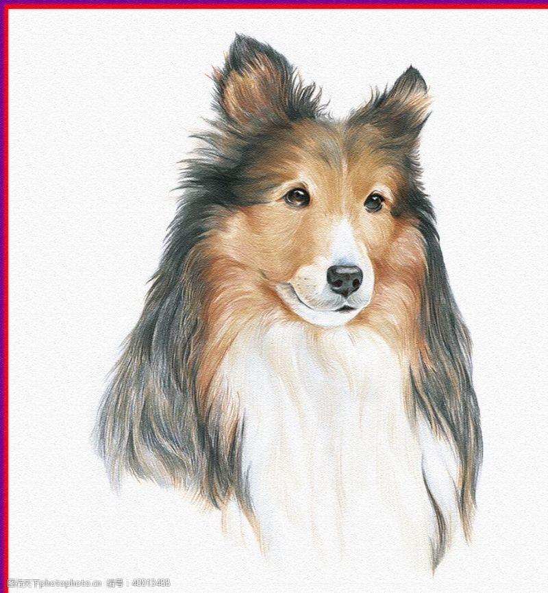 绿色素材狗或狼图片