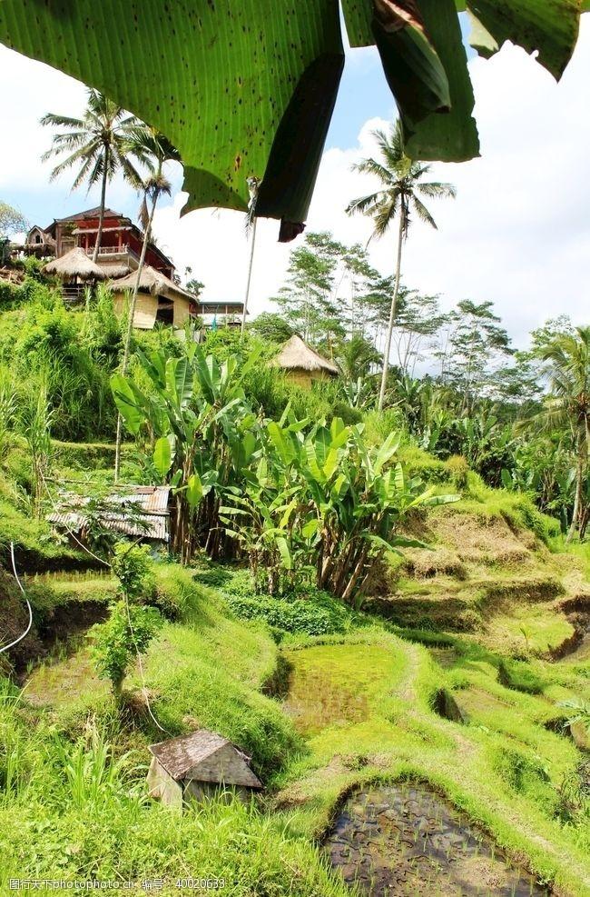 海岛摄影巴厘岛田园风光图片