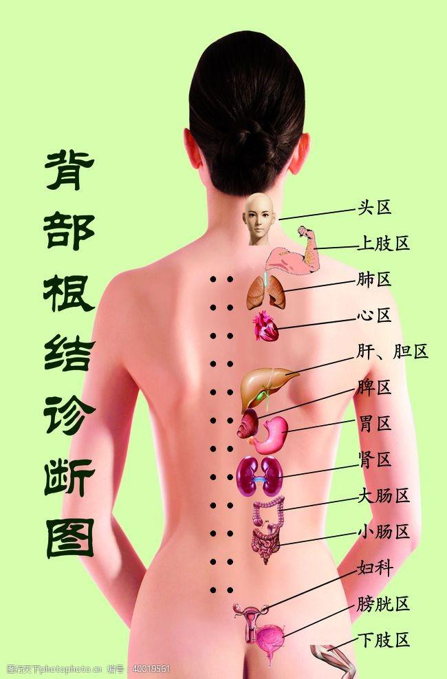 绿底背部根结诊断图图片