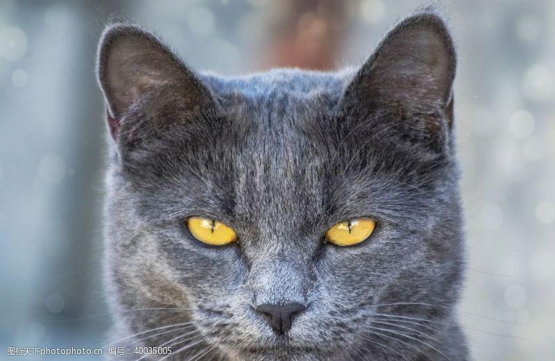 宠物之家家猫图片