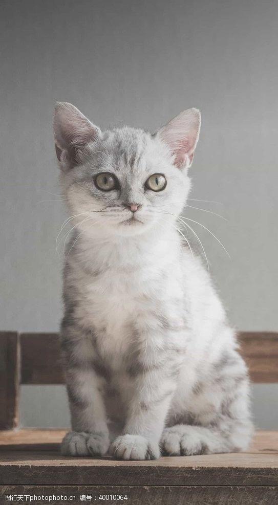 加菲猫猫图片