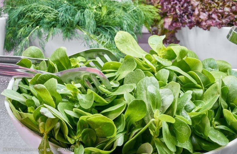 大葱蔬菜图片