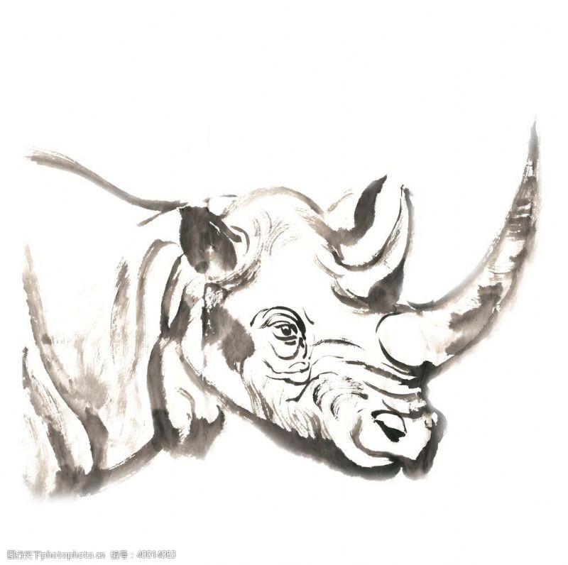 时尚插画犀牛的头部插画图片