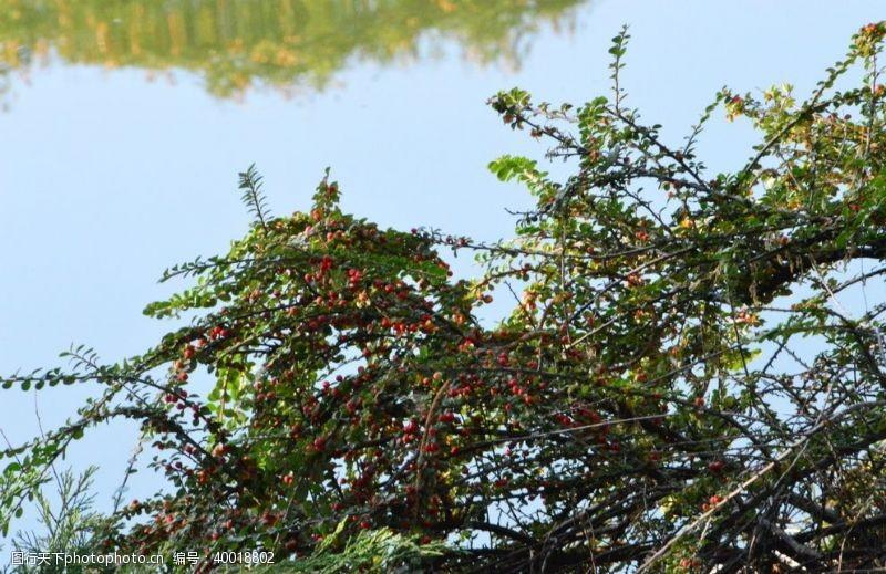 枝条园林风景图片