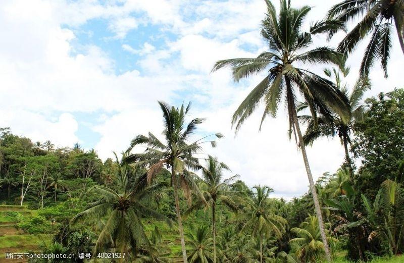 海岛摄影巴厘岛田园图片