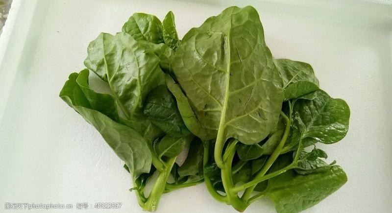 潺菜叶图片