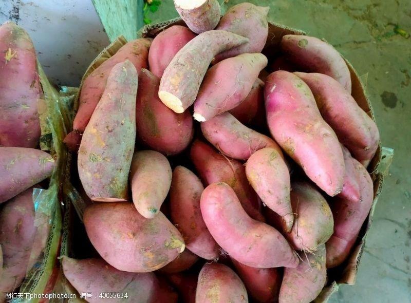 菜叶红薯图片