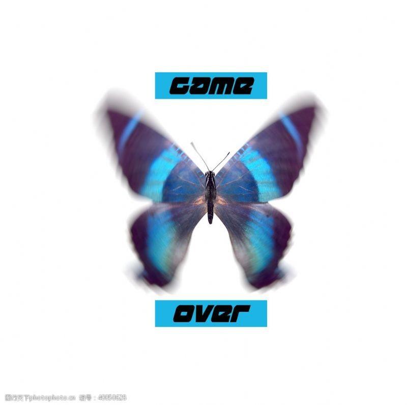 设计图案蝴蝶昆虫T恤图案排版设计图片