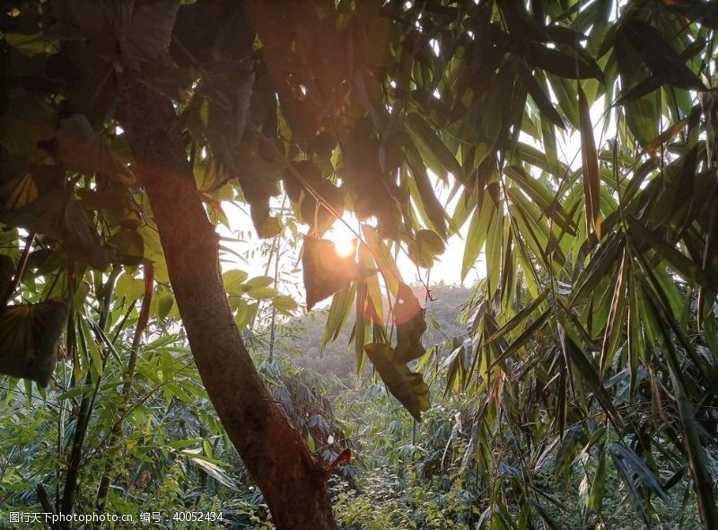 树荫揭阳牛岭山公园图片