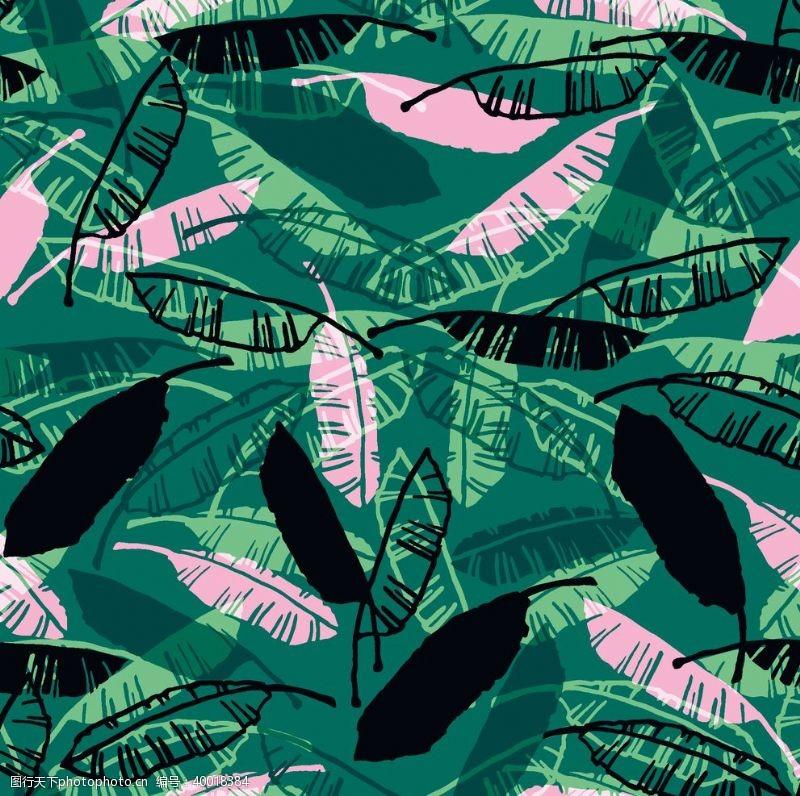 棕榈叶热带树叶图片