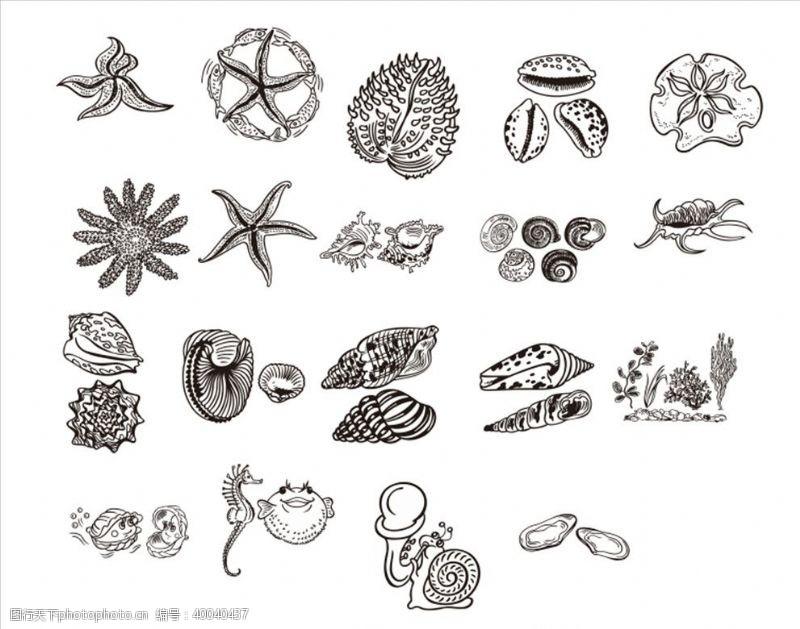 海螺海底生物图片