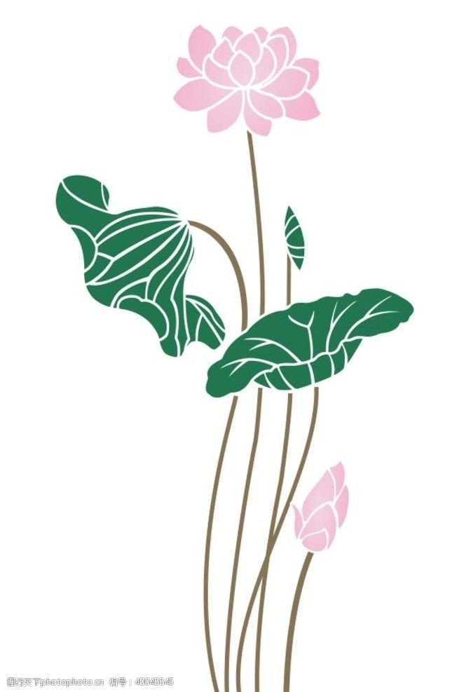 矢量花朵矢量荷花素材图片
