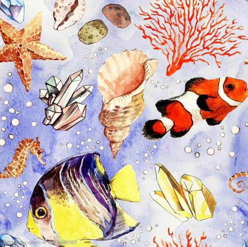 海螺海底世界图片