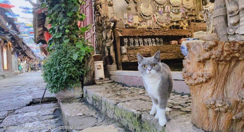 石板古镇上的猫图片