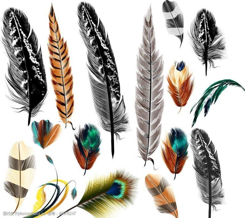 羽毛图片简笔画