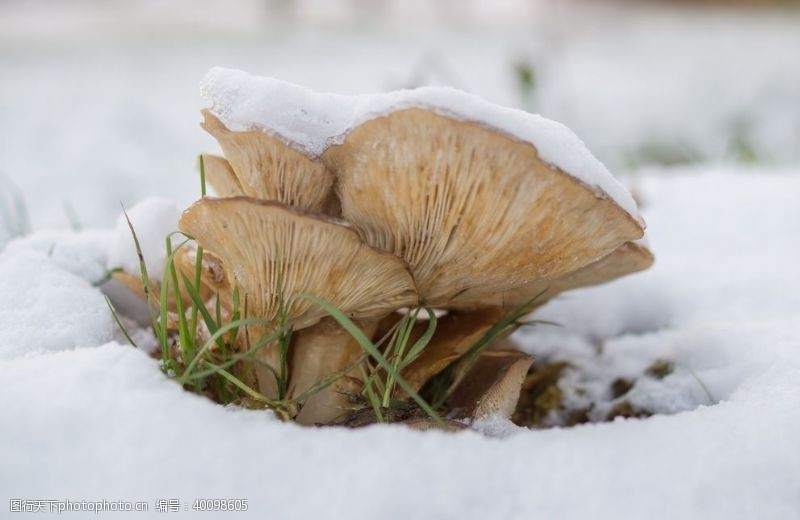 食用菌蘑菇图片