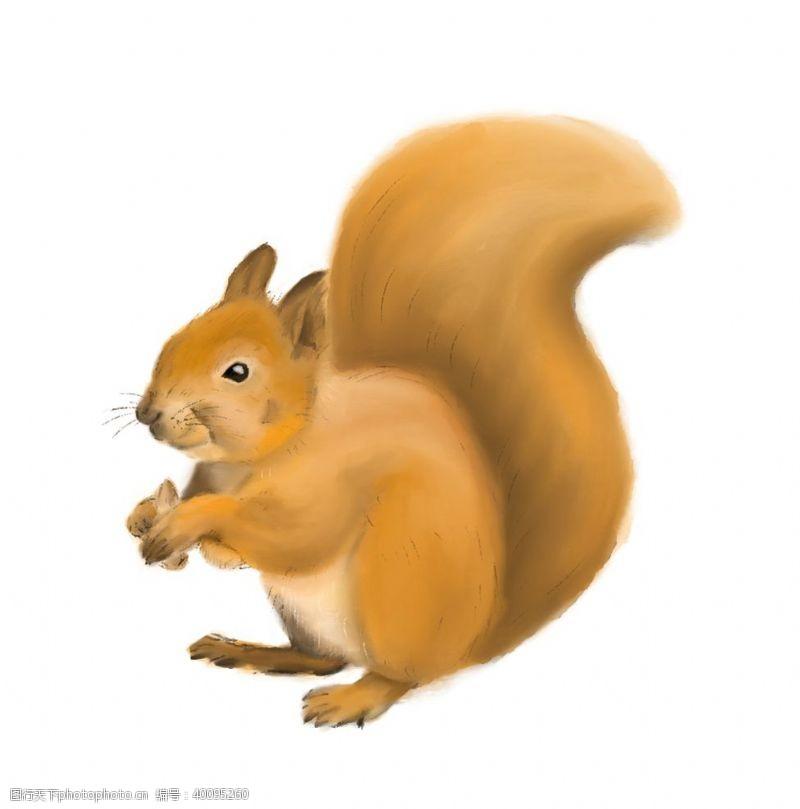 动物形象手绘松鼠图片