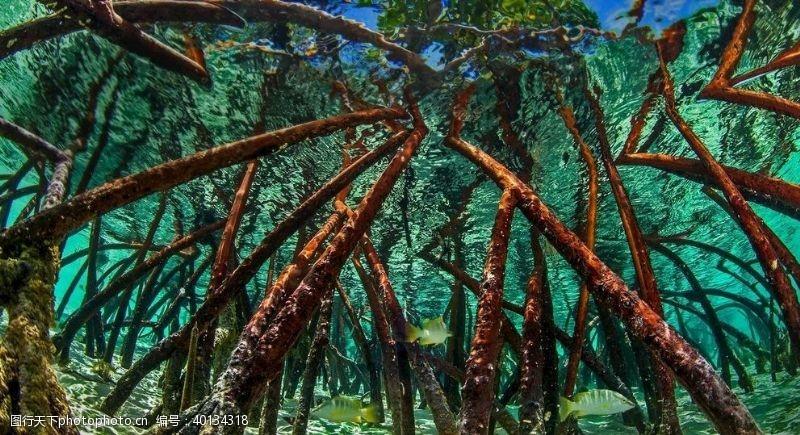高速公路树木图片