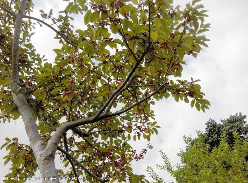 风景区树图片