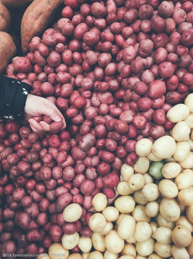 荷兰土豆图片