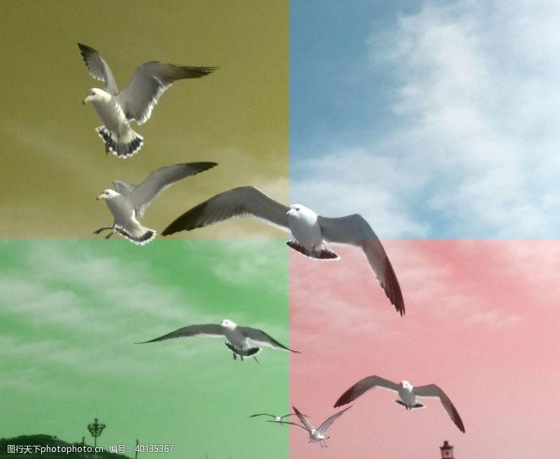 飞翔海鸥图片