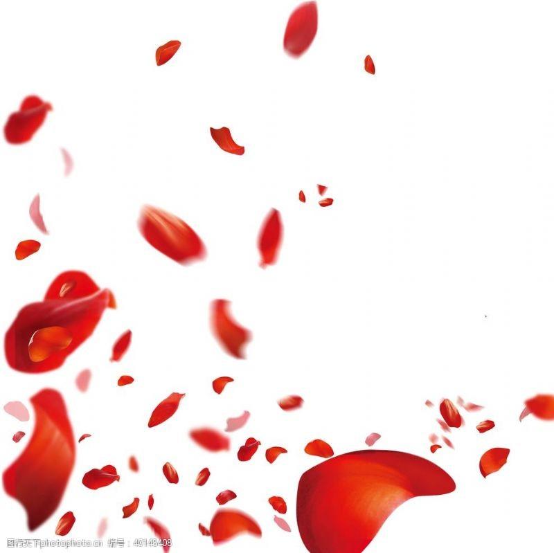 玫瑰花朵花瓣图片