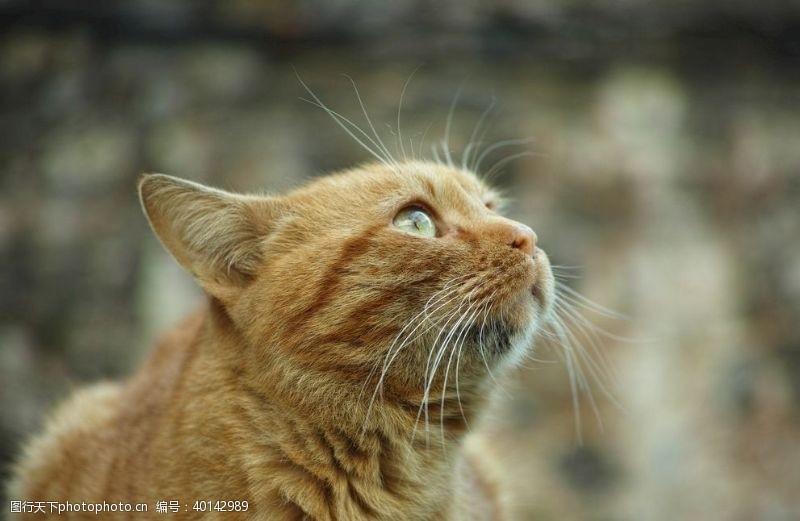 宠物小狗橘猫图片