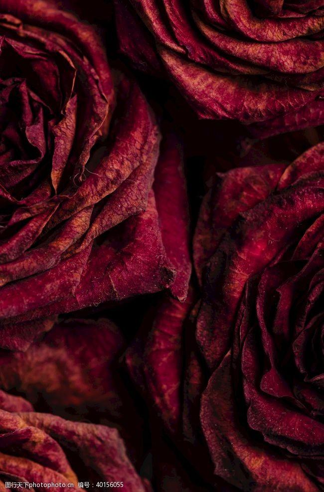 花束玫瑰图片