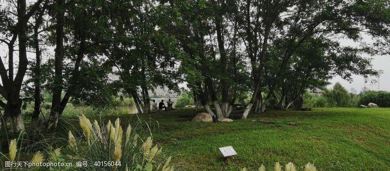 湿地公园草坪图片