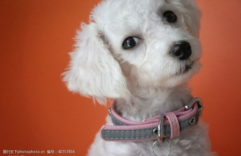 宠物小狗宠物图片
