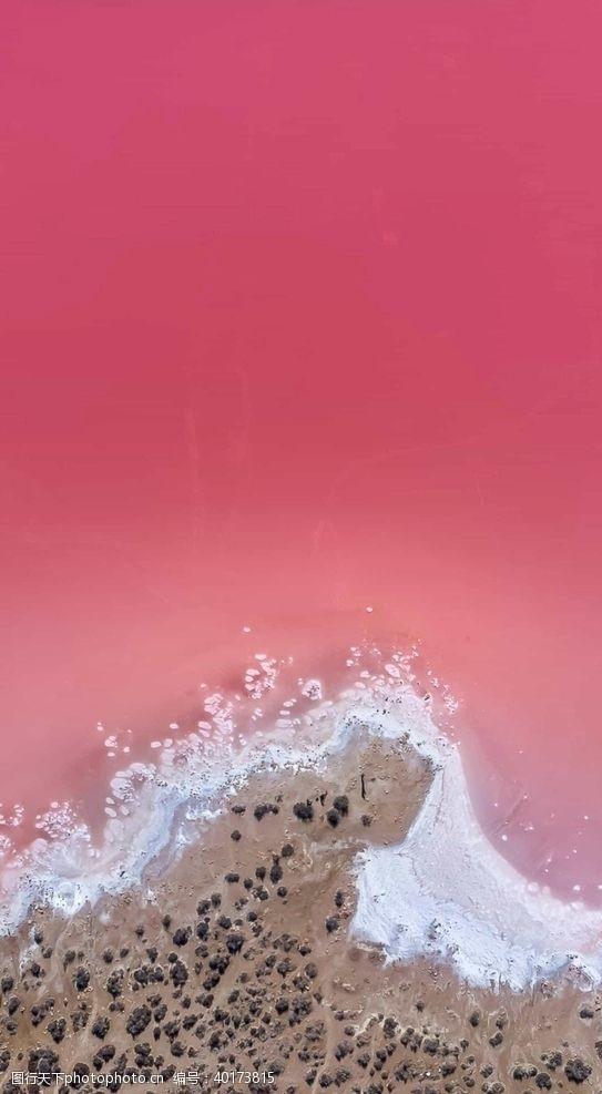 棕榈树粉色的海图片
