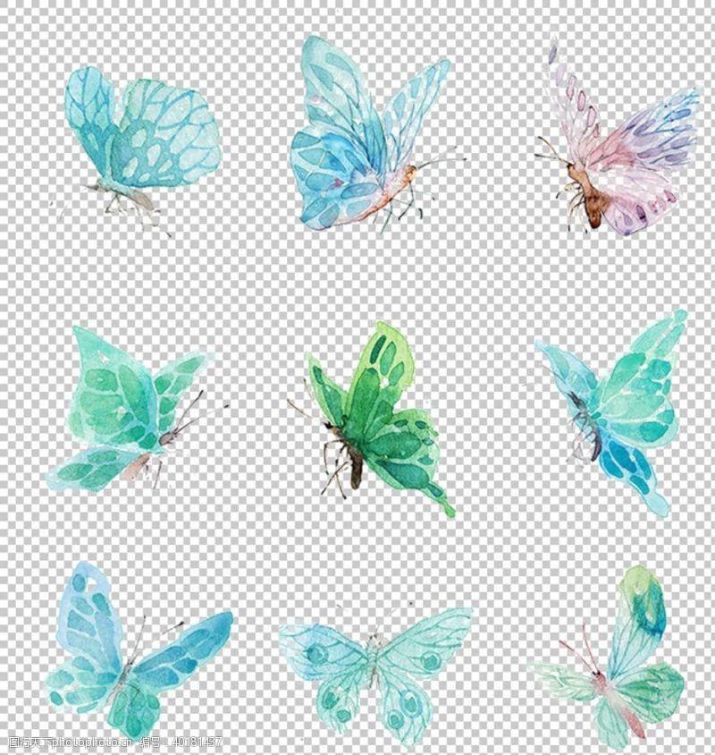 花瓣蝴蝶图片