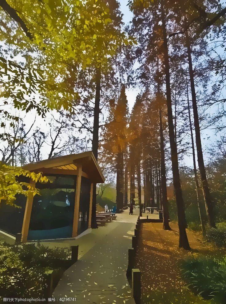 木桥林间小屋图片