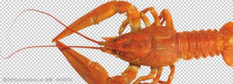 美国龙虾图片