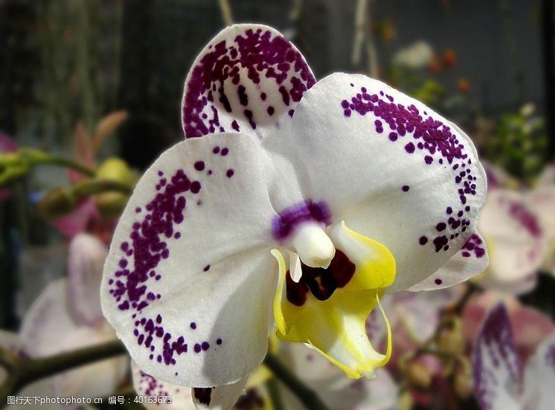 花瓣清新漂亮的玉兰花图片