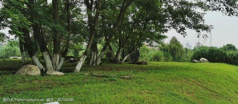 绿地湿地小景图片