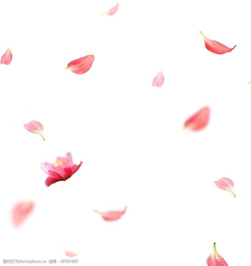 桃花花瓣图片