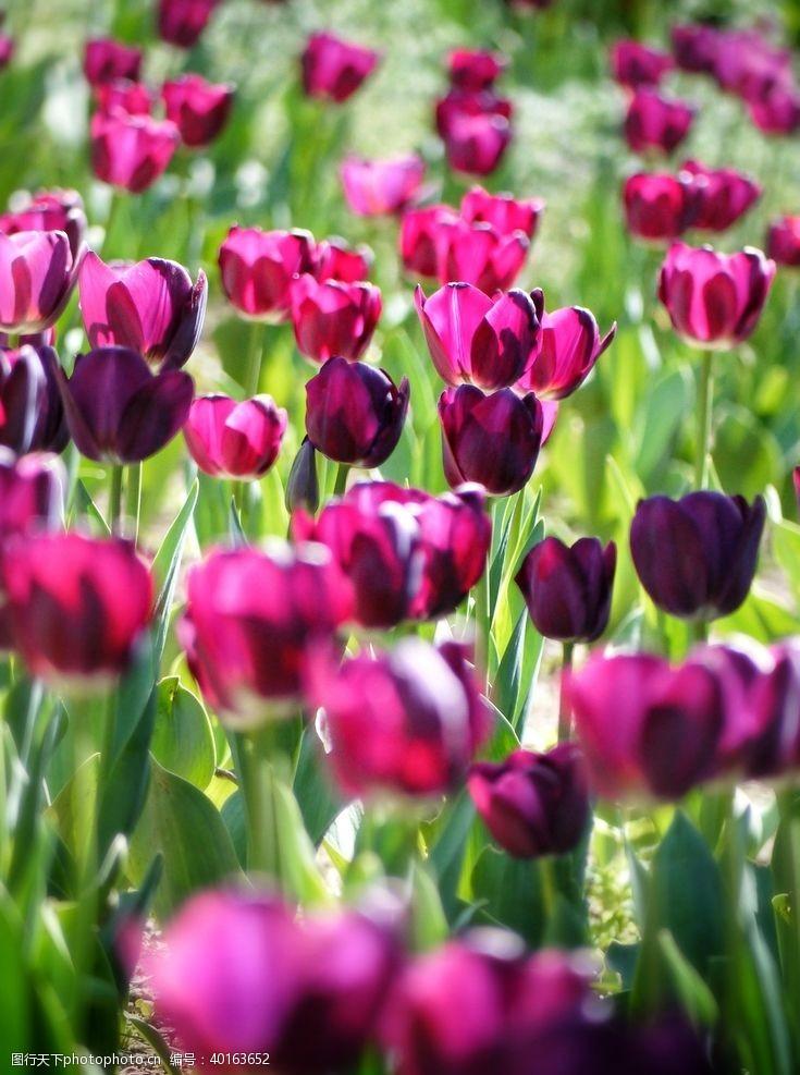 花瓣花卉图片