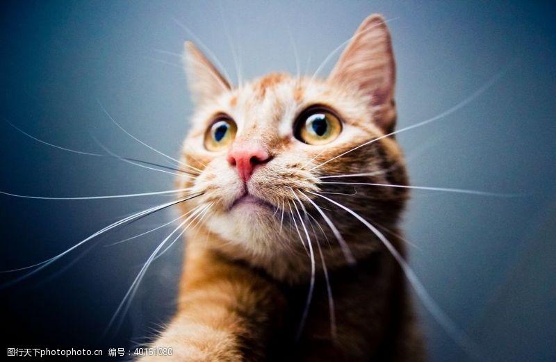 其他生物猫图片