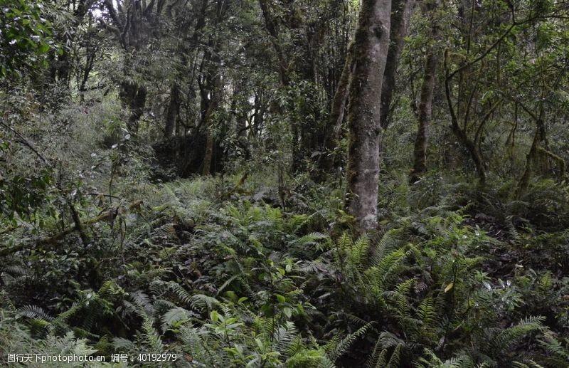 古树森林图片