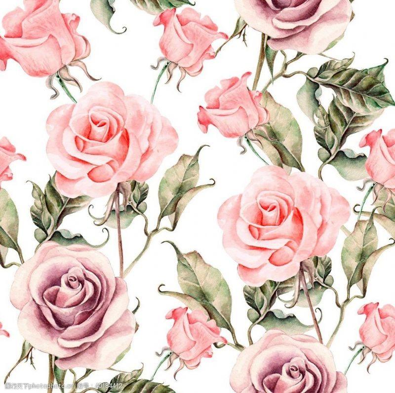 玫瑰花朵手绘花图片