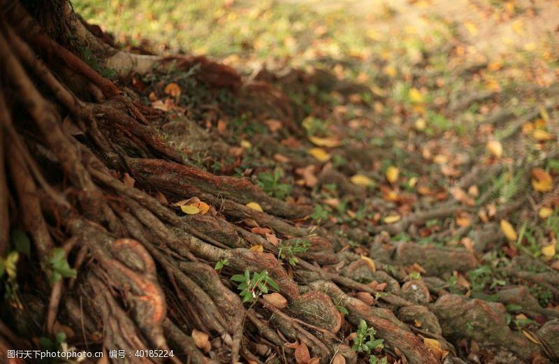 树苗树根图片